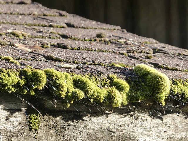 Old shingles