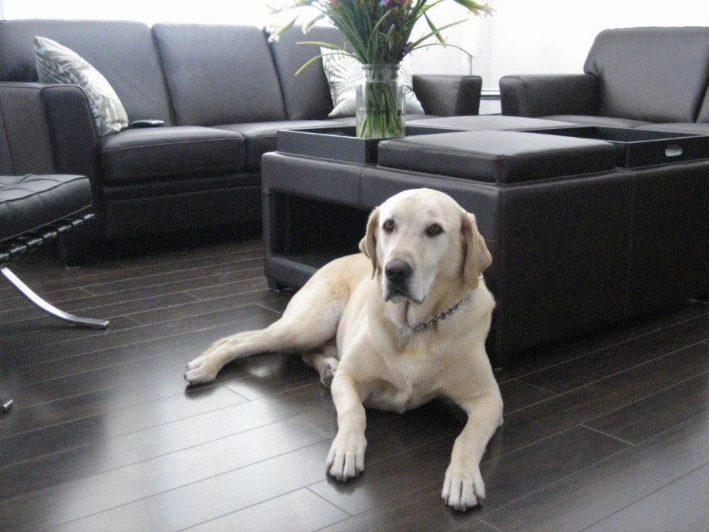 Best Flooring For Dogs