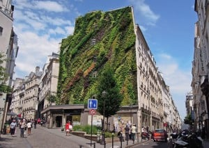 green wall Paris