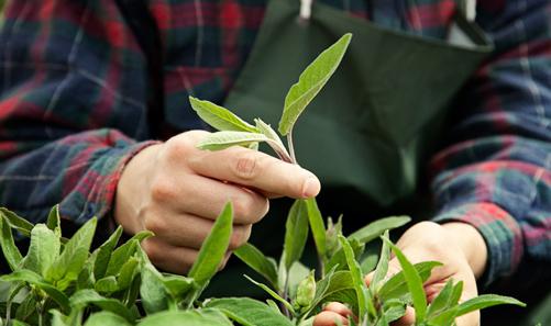 sustainable-gardening-header