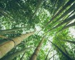 Eco-friendly bamboo forest