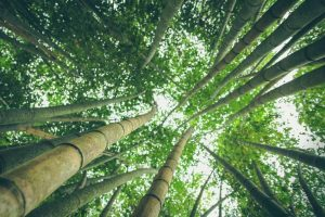 Eco-friendly bamboo forest 2