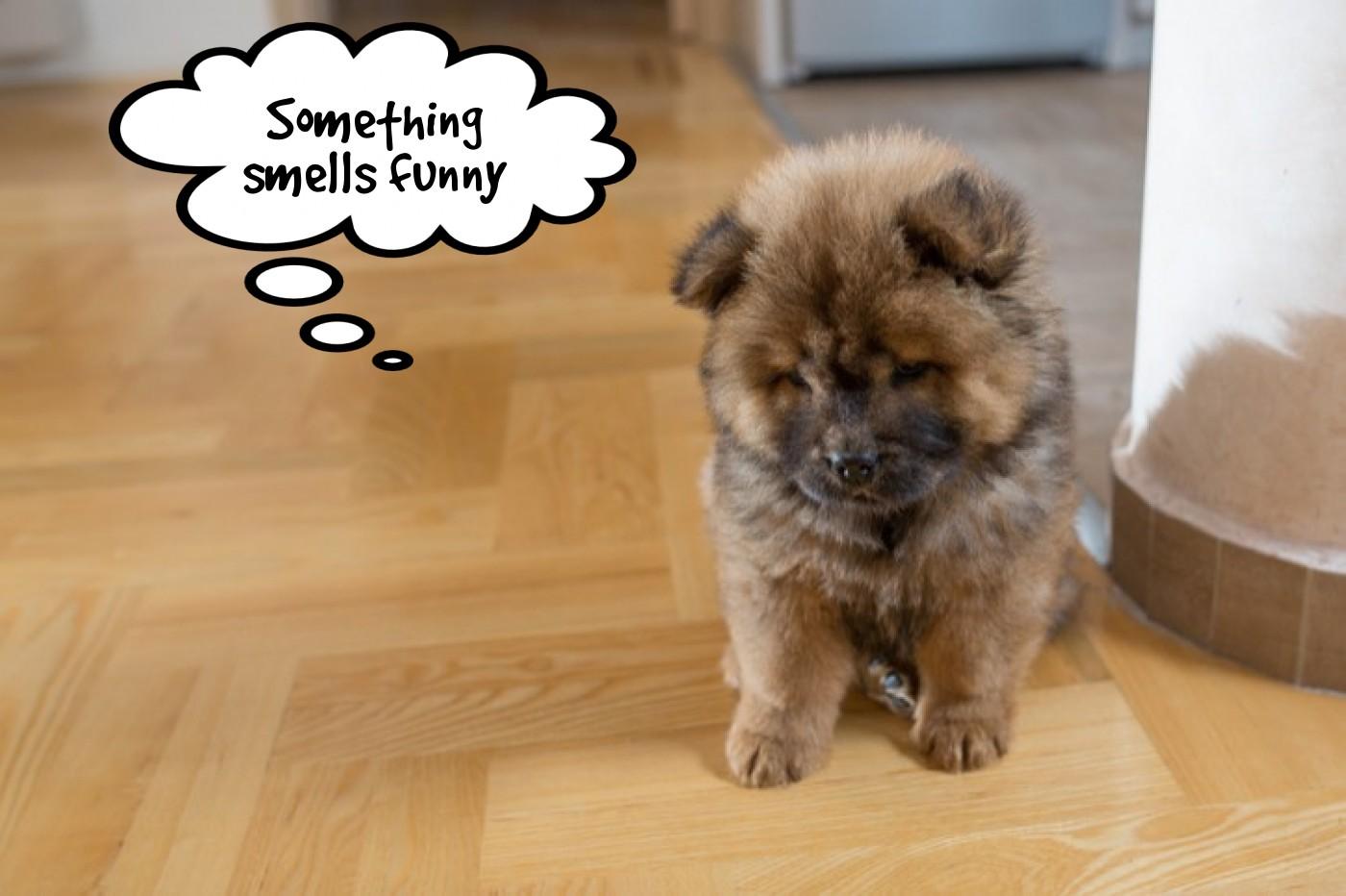 flooringsmellchemicalstoxicpuppy