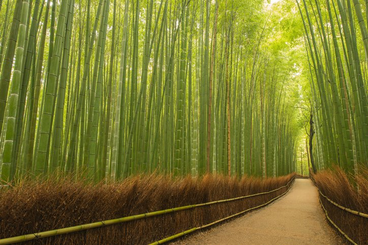 Path in an eco-friendly dense bamboo forest