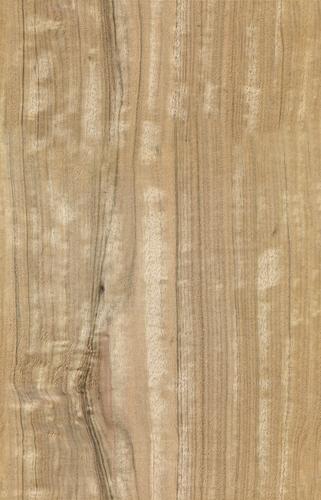eucalyptus texture