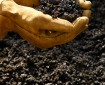 Hand holing Soil created from Home Composting kitchen scraps or vegetables and fruit along with fall leaves and grass clippings. Final product dark brown earth rich with nutrients and worms to spread around the garden.