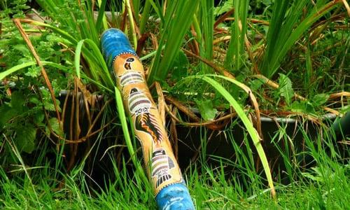 eucalyptus trees make the best didgeridoos