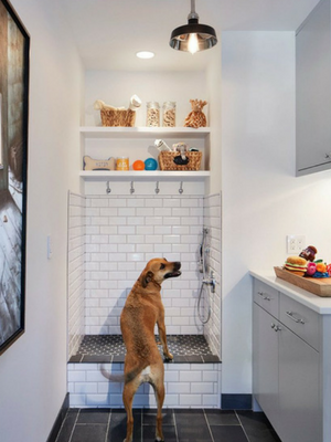 Dog Shower in Pet-Friendly Home Renovation