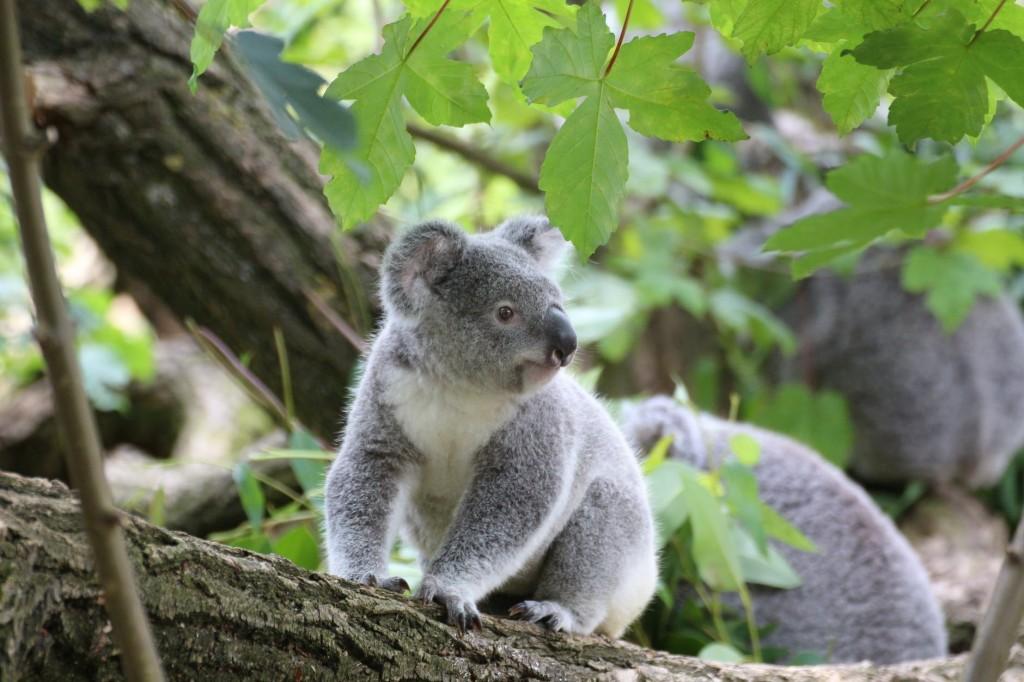 Eco friendly eucalyptus floor