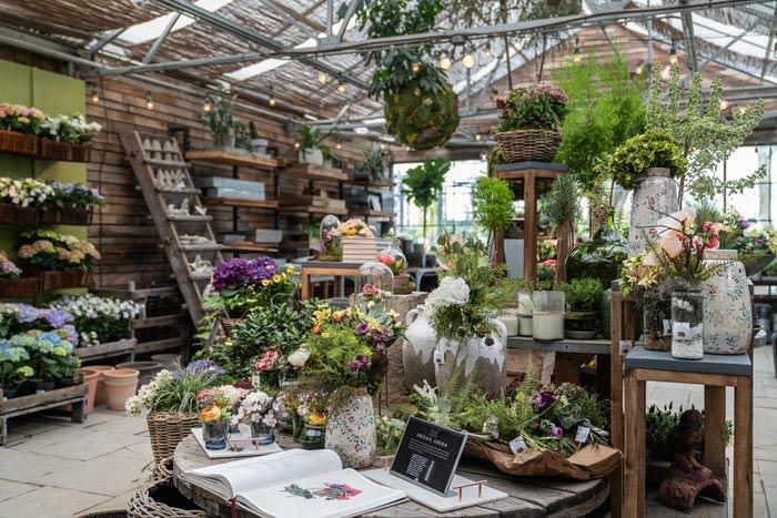 Unique plants garden