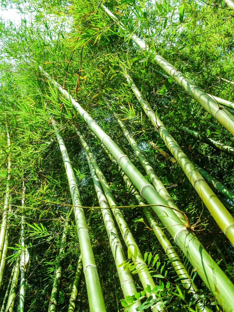 Bamboo is 100% natural