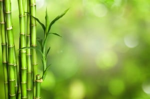 locking bamboo floors