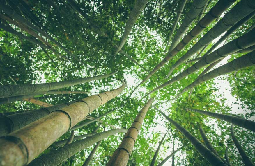 lowangle photography of bamboo trees