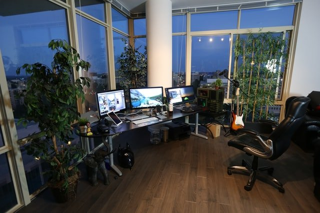 Plant in the office