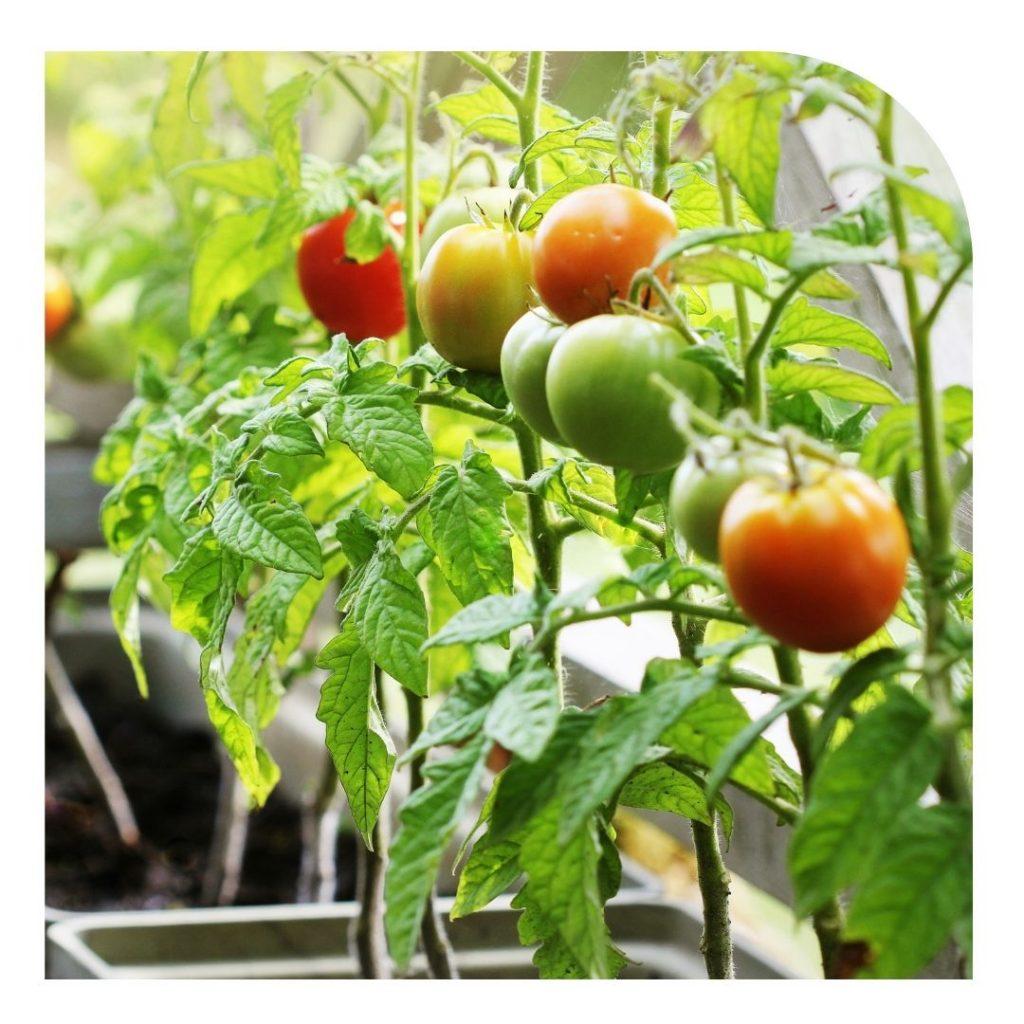 sustainable-vegetable-garden