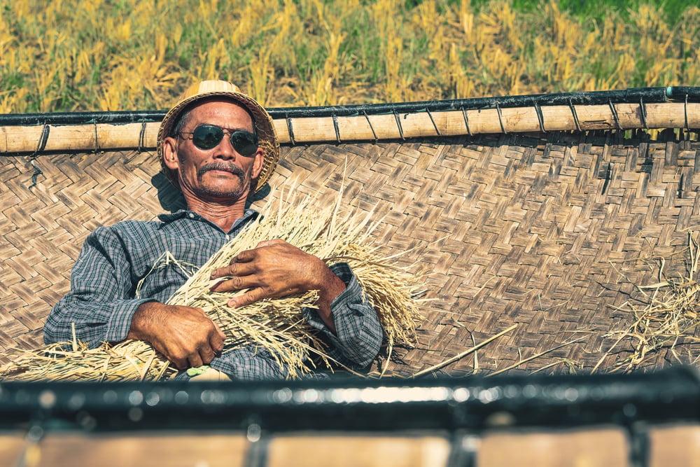 farmer-bamboo-rice-harvest-woven-bamboo